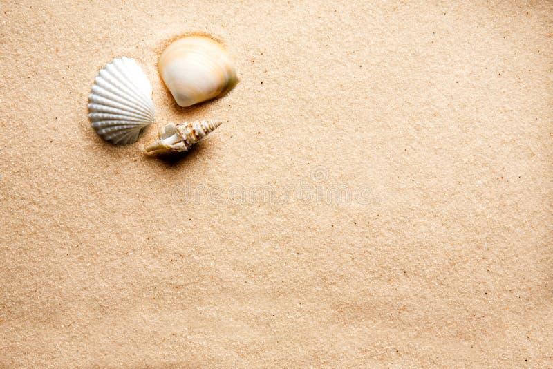 Fundo do escudo da areia fotos de stock