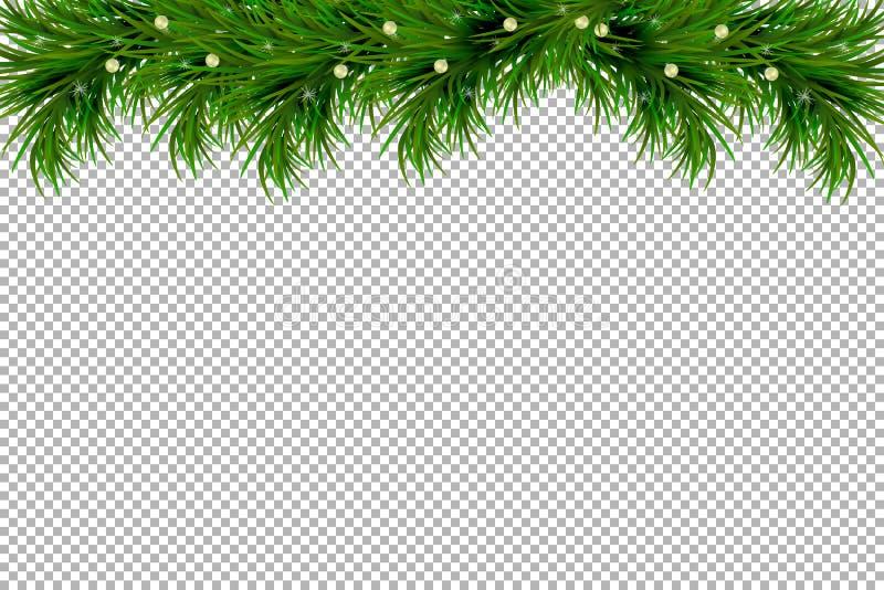Fundo do Feliz Natal e do ano novo feliz com os ramos do abeto isolados no fundo transparente Projeto moderno Backg universal ilustração stock