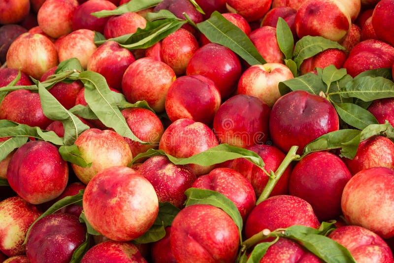 Fundo do fruto, nectarina/fruto dos pêssegos imagem de stock