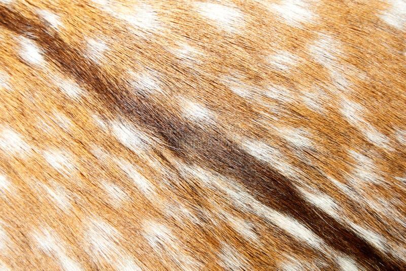 Fundo do Gazelle fotografia de stock