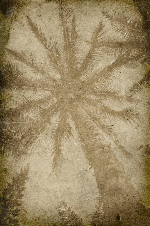 Fundo do Imprint da palmeira do vintage imagem de stock royalty free