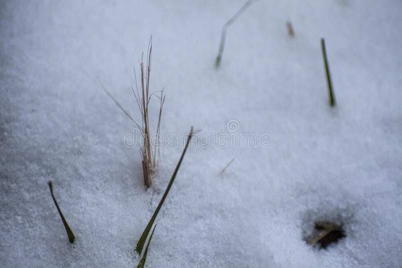 Fundo do inverno Neve, grama, etc. imagens de stock royalty free