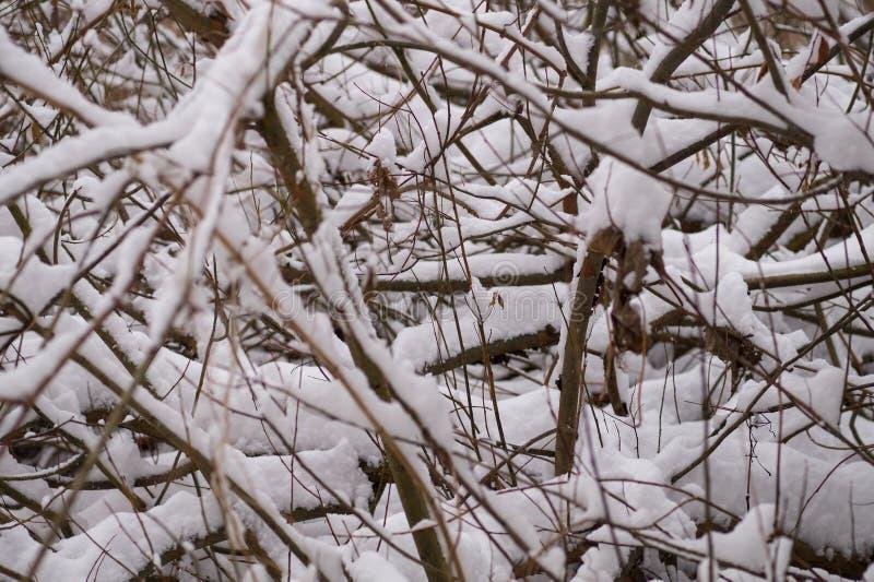 Fundo do inverno - ramos cobertos com a neve fotos de stock royalty free