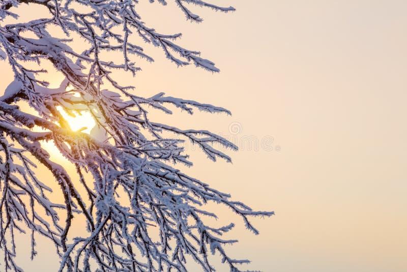 Fundo do inverno - ramos congelados contra a luz solar foto de stock royalty free