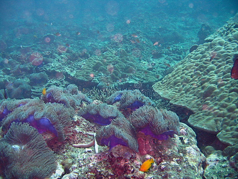 Fundo do mar tropical   fotografia de stock royalty free