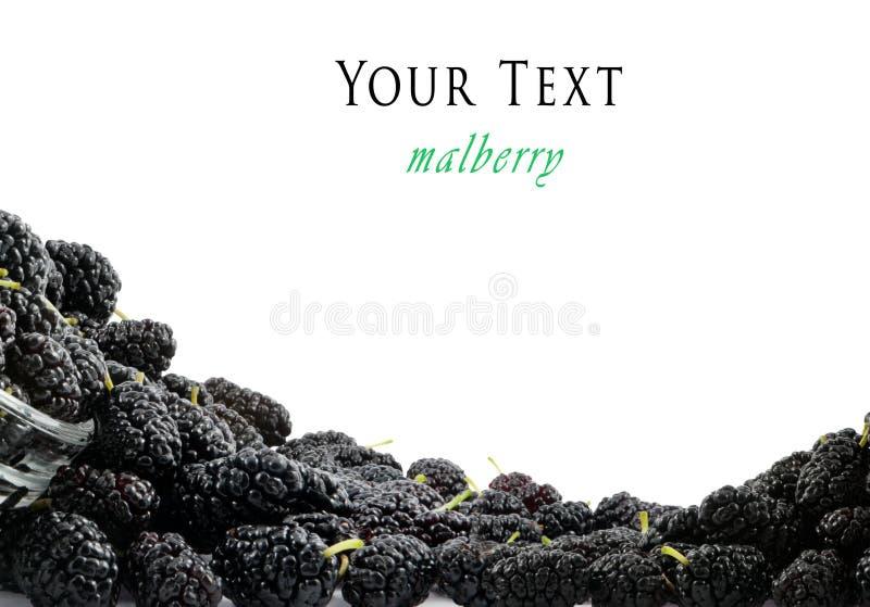 Fundo do mulberry derramado imagens de stock royalty free