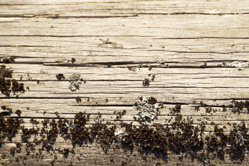 Fundo do musgo e da madeira, para quadros, para o fundo, para o photoshop fotos de stock