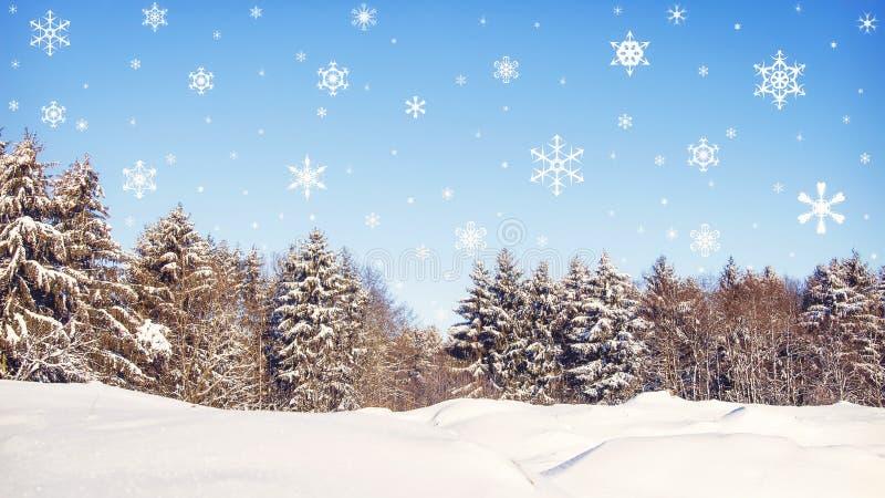 Fundo do Natal Floresta do inverno na neve com flocos de neve de queda Conceito do ano novo imagem de stock royalty free