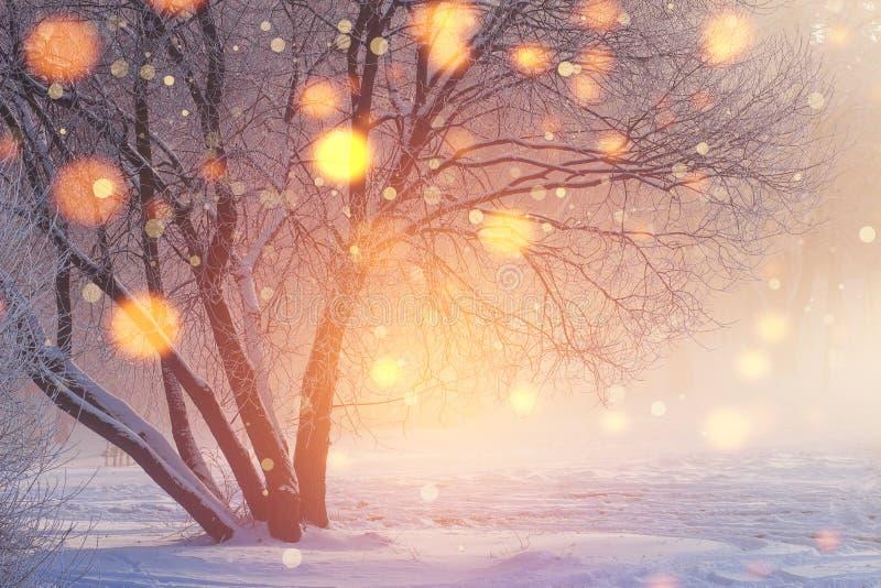 Fundo do Natal do inverno Luzes de brilho na cena gelado Flocos de neve coloridos que incandescem na luz solar no por do sol imagem de stock