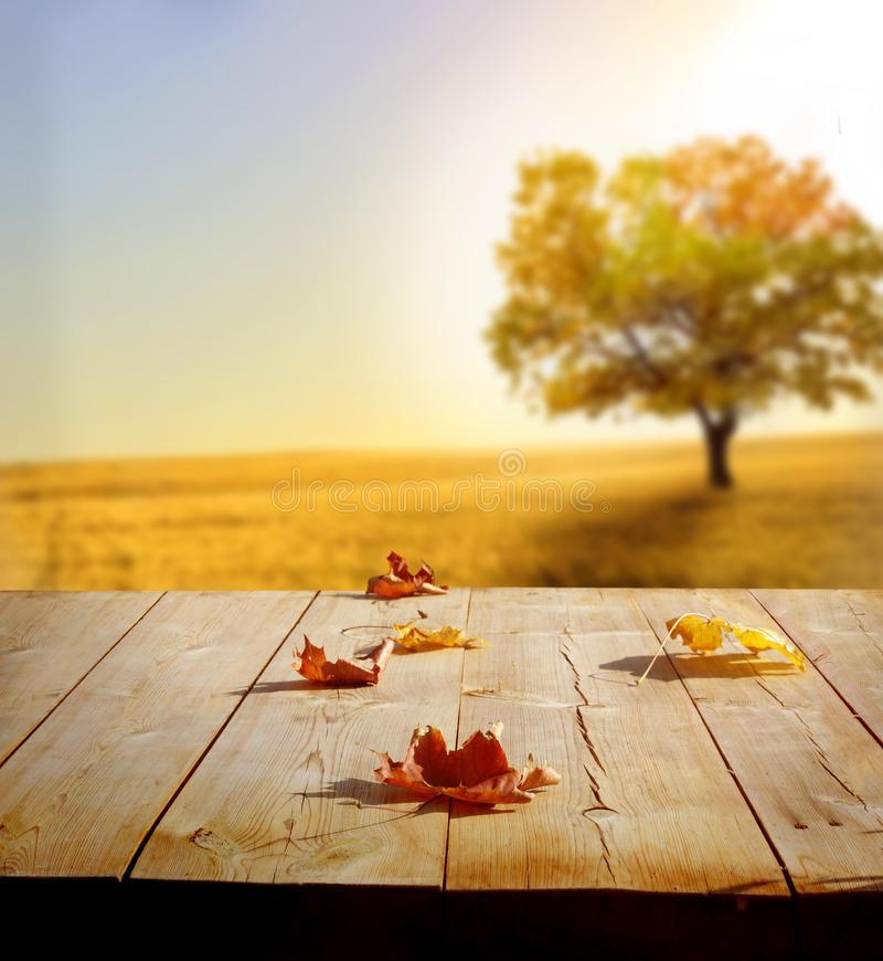 Fundo do outono foto de stock royalty free