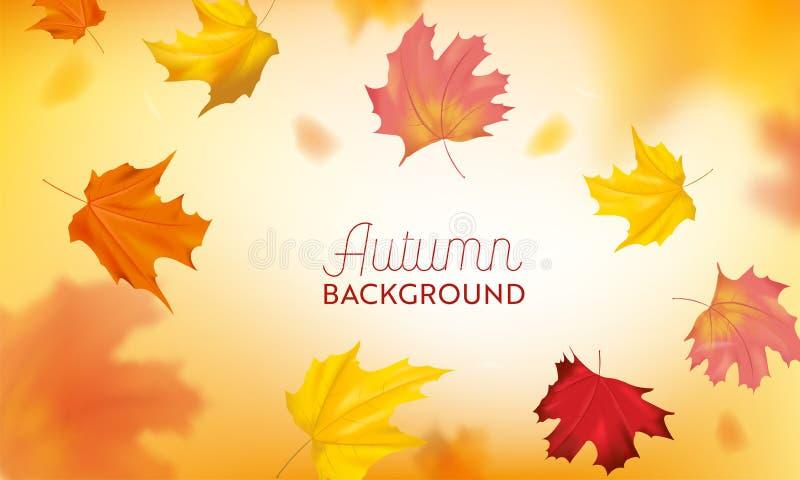 Fundo do outono com as folhas de bordo vermelhas e amarelas Molde sazonal do projeto da queda da natureza para a bandeira da Web, ilustração stock