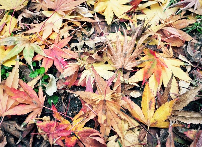 Fundo do outono com as folhas secadas coloridas foto de stock