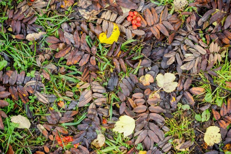 Fundo do outono com as folhas secadas na terra fotografia de stock royalty free