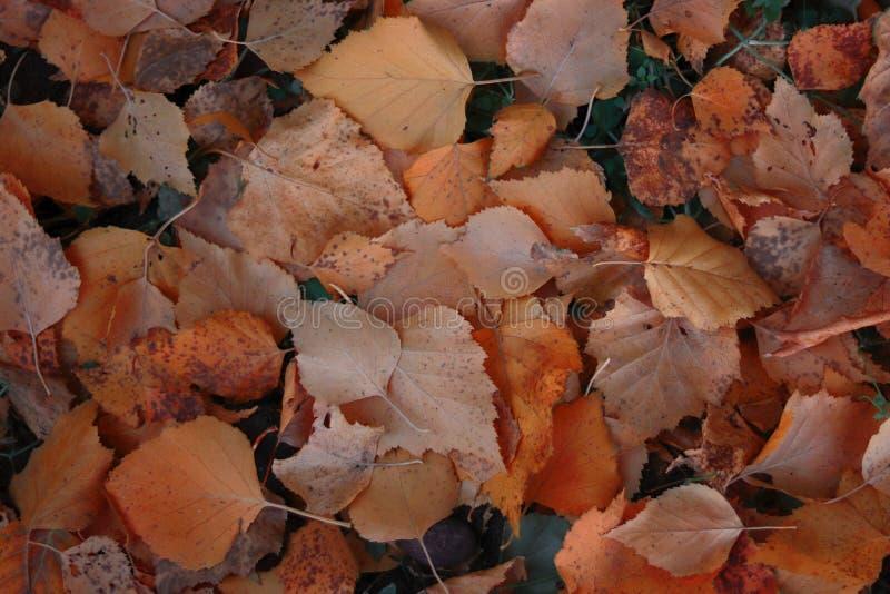 Fundo do outono com folhas coloridas no chão foto de stock royalty free