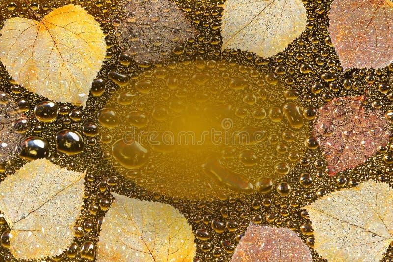 Fundo do outono com folhas, gotas de água e quadro para o texto foto de stock