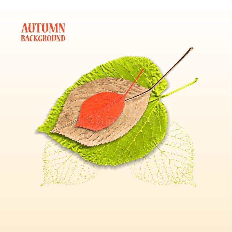 Fundo do outono com folhas Linden e cereja ilustração do vetor