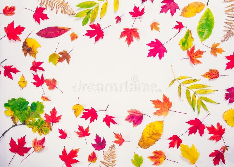 Fundo do outono da vista superior com quadro oval dos tipos diferentes caídos de folhas multicoloridos - verdes, amarelos, laranj fotos de stock royalty free