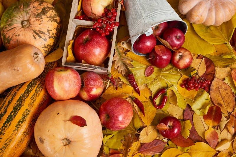 Fundo do outono das folhas amarelas, maçãs, abóbora outono, alimento do eco e conceito da colheita fotos de stock royalty free