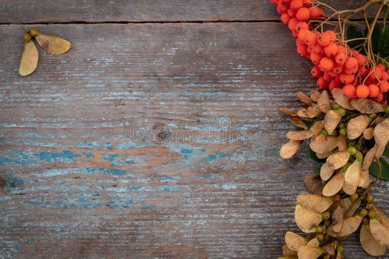 Fundo do outono das folhas e dos frutos caídos com pla do vintage fotos de stock royalty free