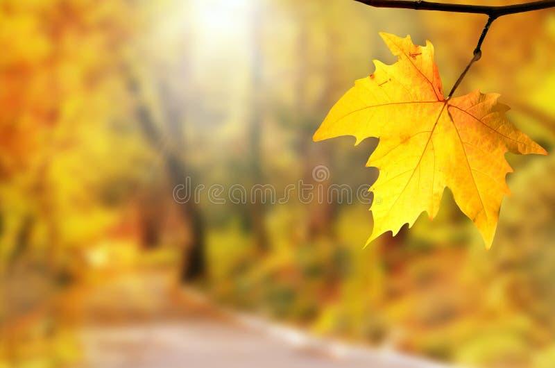 Fundo do outono Folha amarela no parque do outono em um fundo borrado imagem de stock