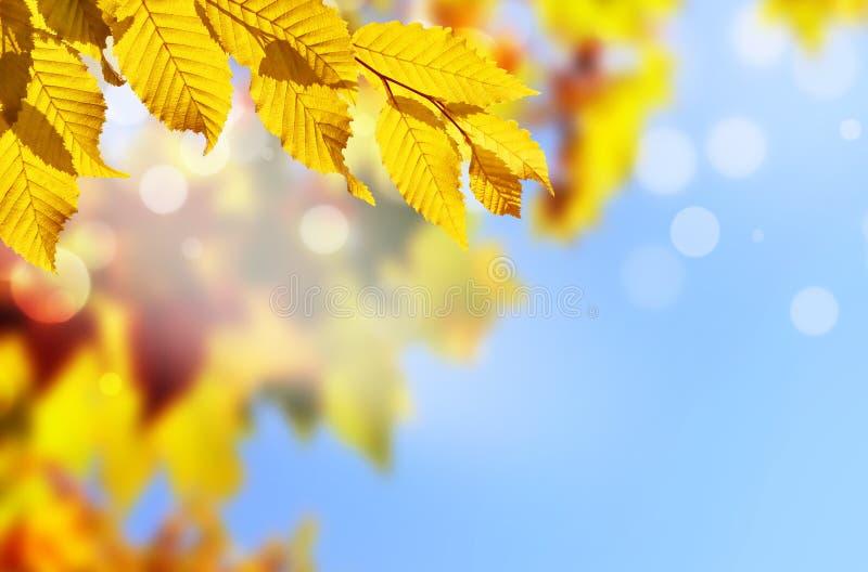 Fundo do outono Folha amarela no parque do outono em um fundo borrado do céu foto de stock royalty free