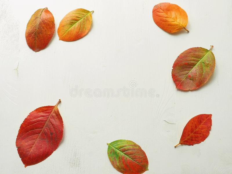 Fundo do outono Quadro com as folhas vermelhas, amarelas e verdes imagens de stock royalty free