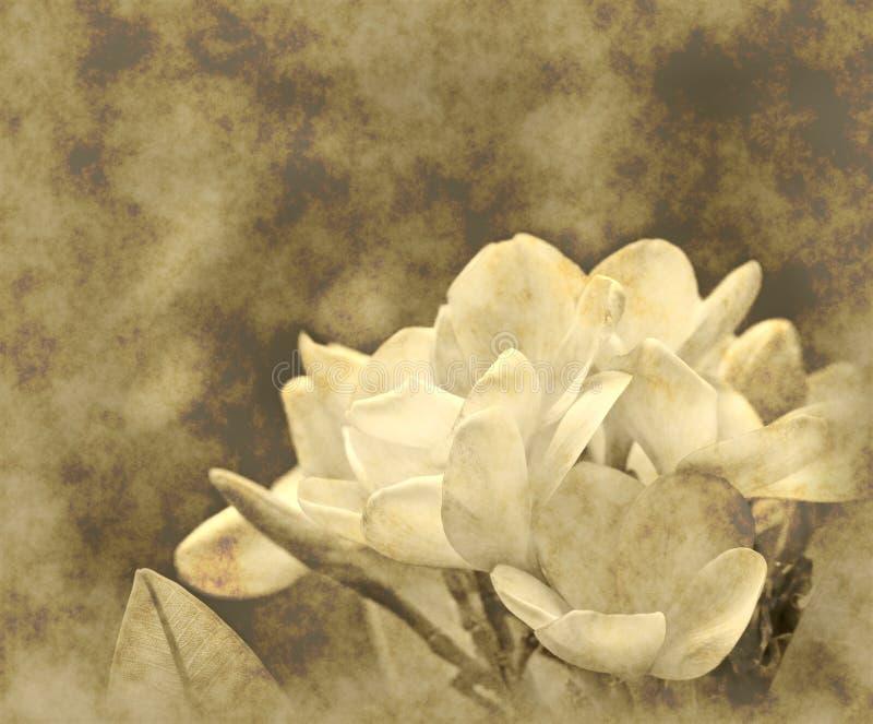 fundo do papel da flor do grunge ilustração royalty free