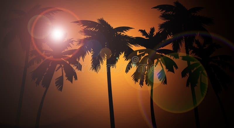 Fundo do por do sol, palmeiras, Florida ilustração royalty free