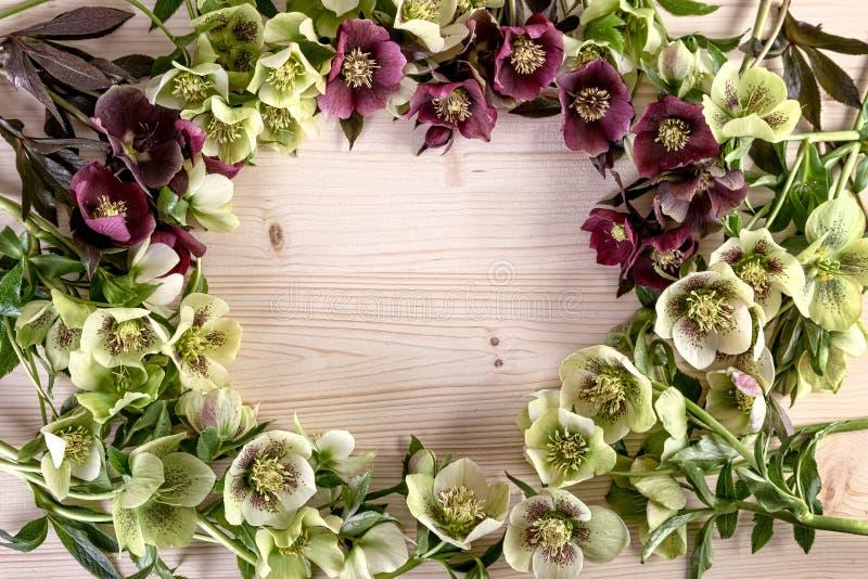 Fundo do quadro do dia de mães do aniversário do casamento do feriado As flores da mola do vintage de quaresmal aumentaram fotografia de stock royalty free