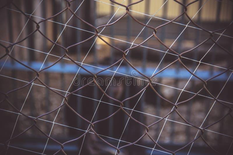 Fundo do rabitz da malha do metal Fundo borrado, primatas em uma gaiola zoo fotos de stock royalty free