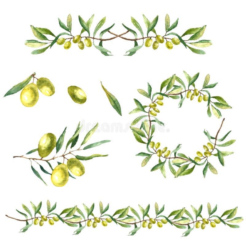 Fundo do ramo de oliveira da aquarela
