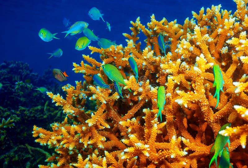 Fundo do recife de corais foto de stock