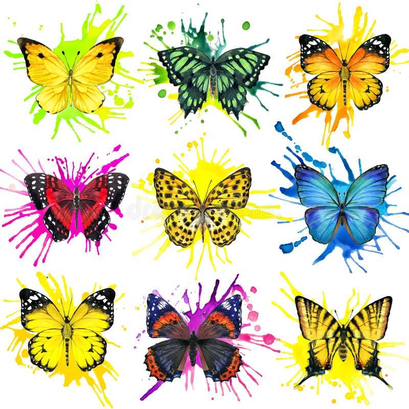 Fundo do respingo da borboleta e da aquarela ilustração stock