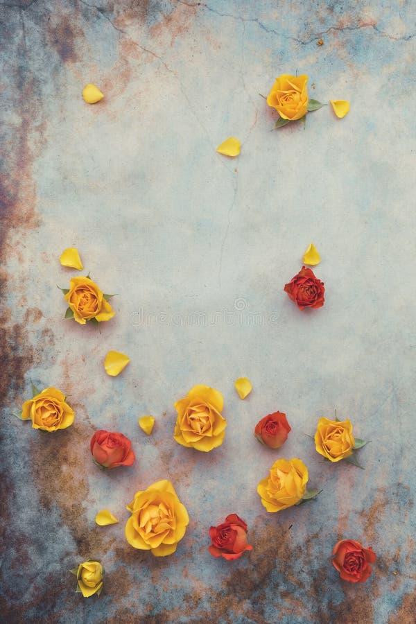Fundo do Rosebud e da flor fotografia de stock