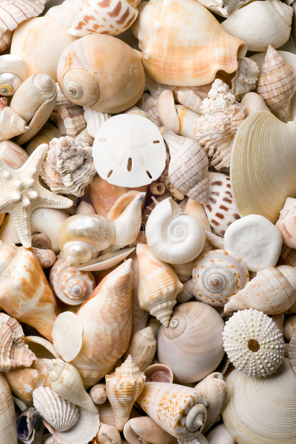 Fundo do Seashell fotografia de stock royalty free