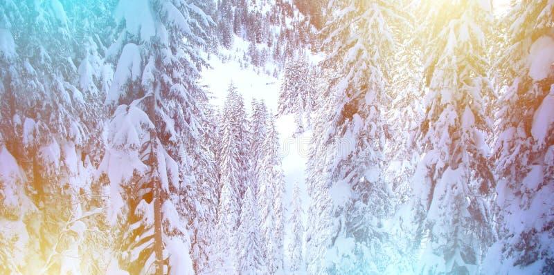 Fundo do Sparkle de inverno com árvores de pinos e neve imagem de stock royalty free