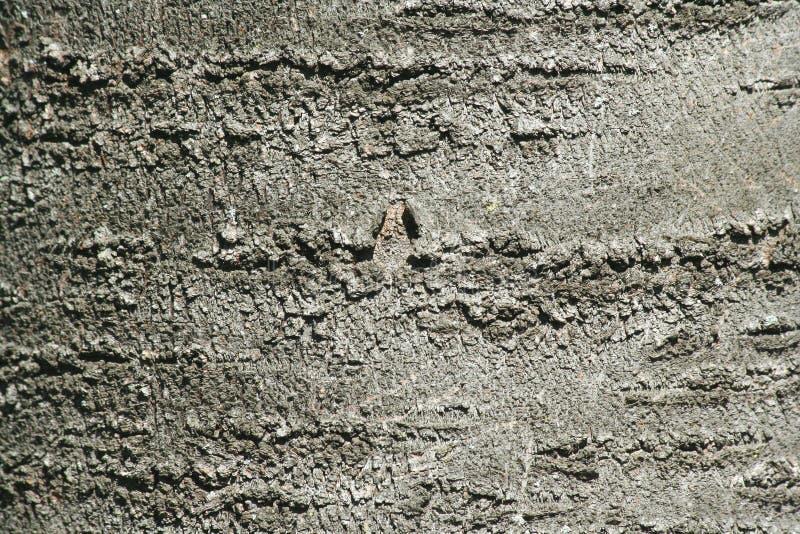 Fundo do sumário da textura da casca de árvore imagem de stock