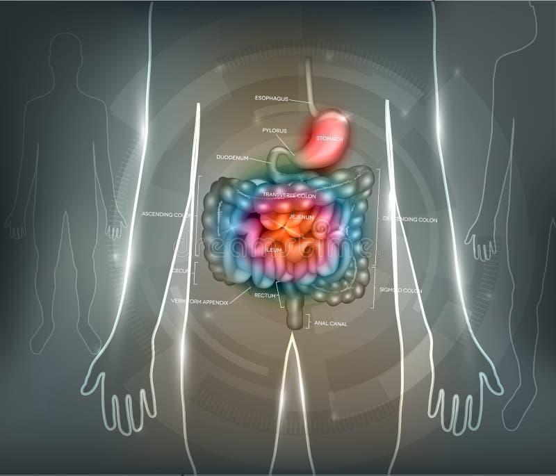 Fundo do sumário do aparelho gastrointestinal ilustração do vetor