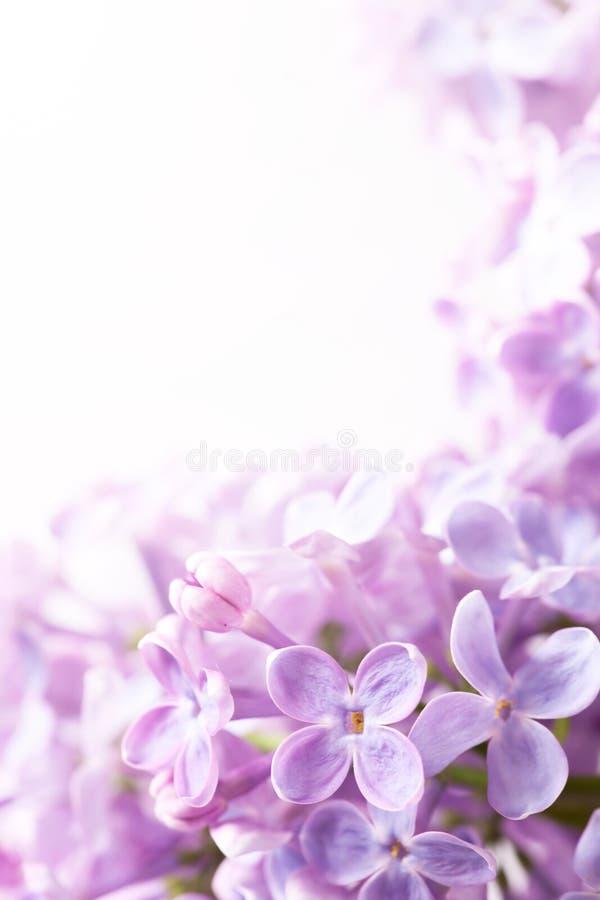 Fundo do sumário do lilac da mola da arte imagens de stock