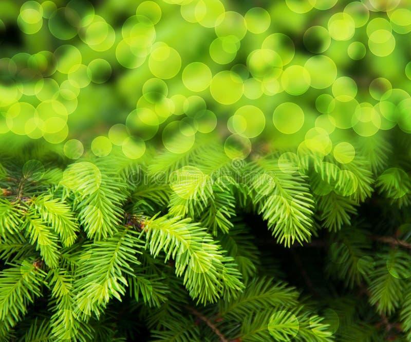 Fundo do sumário do verde do abeto do Natal imagem de stock