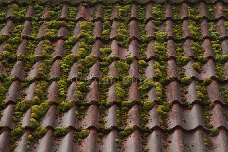 Fundo do telhado de telha vermelha textura coberto de vegetação do telhado fotos de stock royalty free