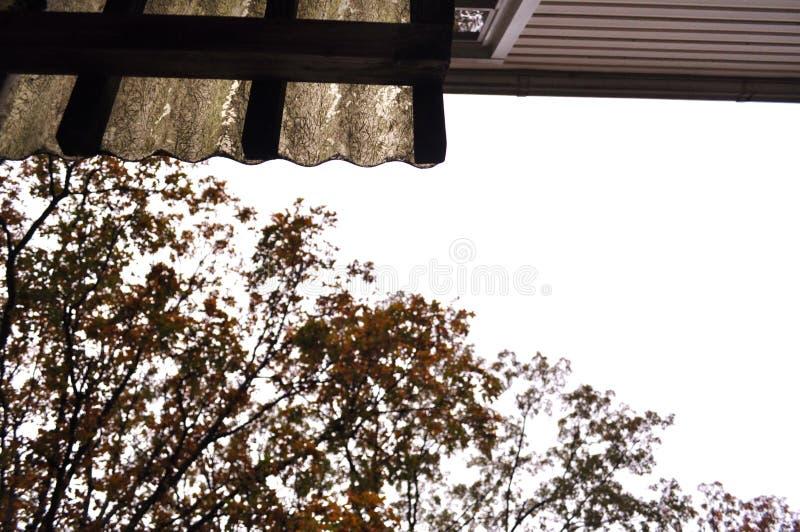 Fundo do telhado e dos ramos de árvore fotografia de stock