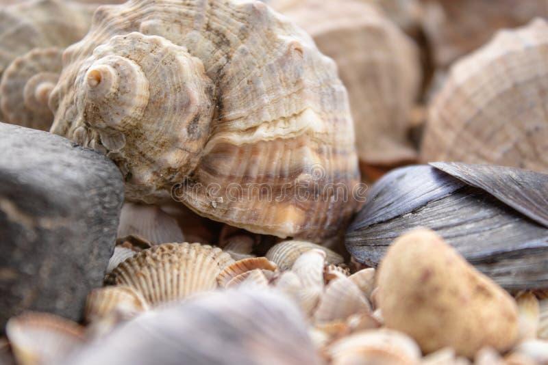 Fundo do tema do mar com close-up dispersado escudos Mar Shell Collection fotos de stock royalty free