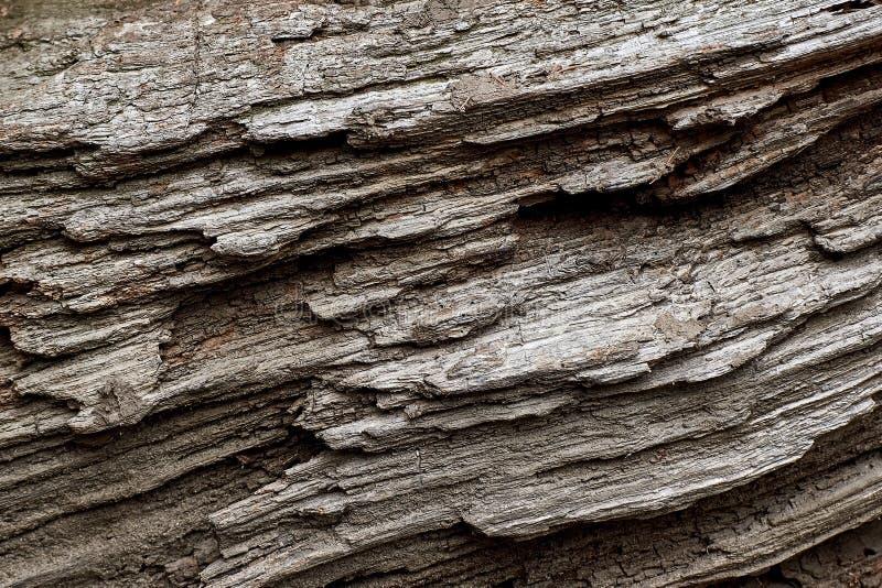 Fundo do teste padrão do tronco de árvore foto de stock