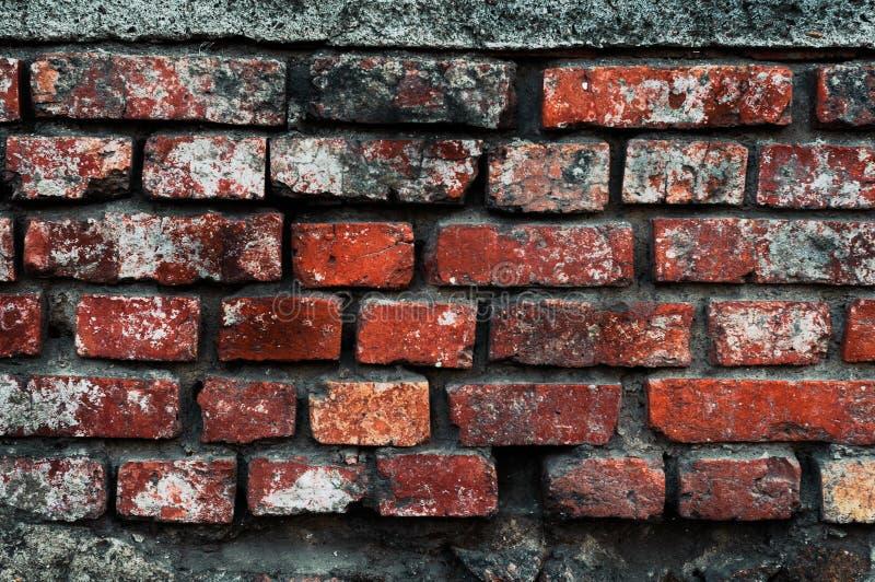 Fundo do tijolo vermelho velho com musgo das quebras e close-up do molde fotos de stock royalty free