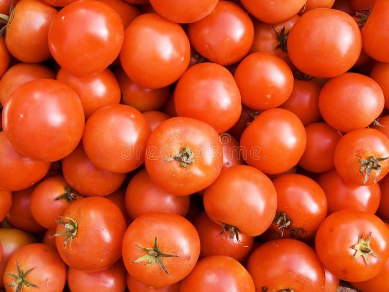Fundo do tomate imagem de stock