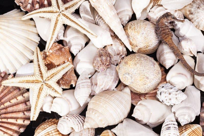 Fundo do vário tipo de shell marinhos do mar fotografia de stock royalty free