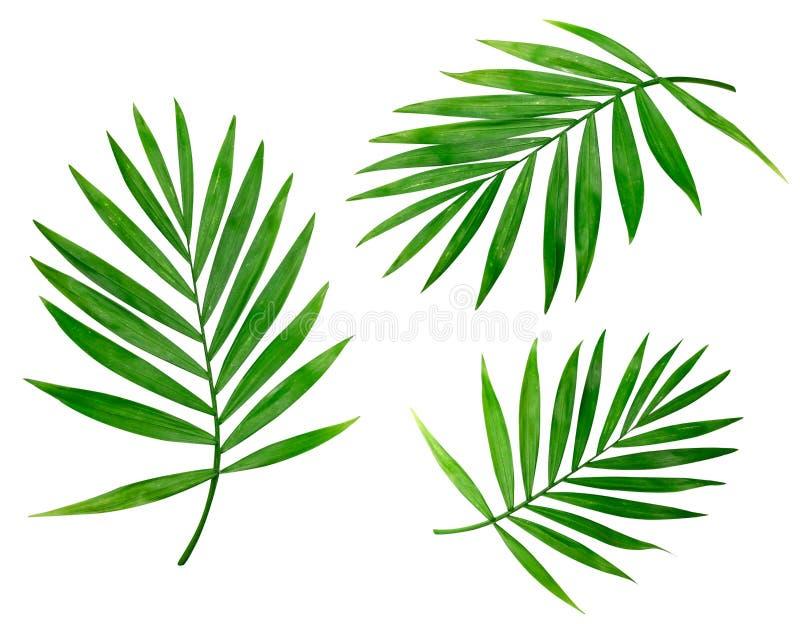 Fundo do verão com as palmas tropicais isoladas fotos de stock