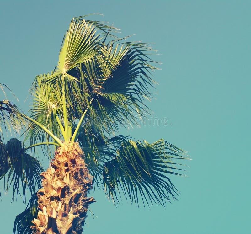 Fundo do verão com a palmeira contra o céu fotografia de stock