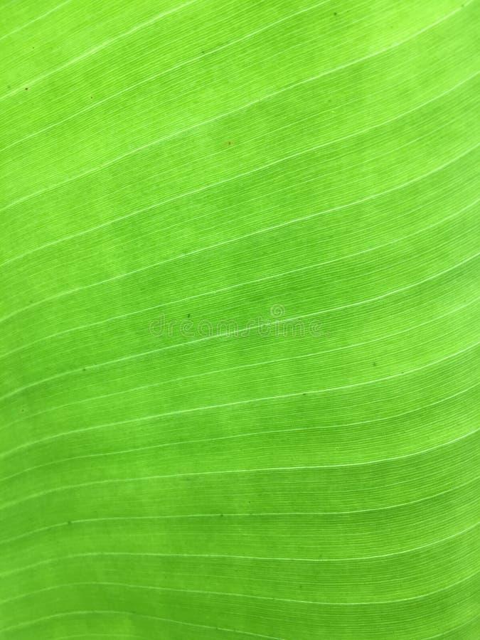 fundo do verde da folha da banana foto de stock